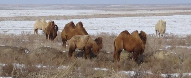 Kazakhstan – Guide & Itinéraire