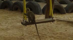 #680 : Bringing your green monkey kids to the kindergarten