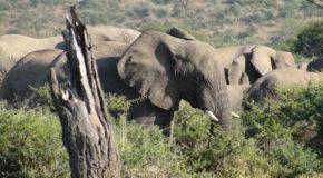 Afrique du Sud – Guide & Itinéraires