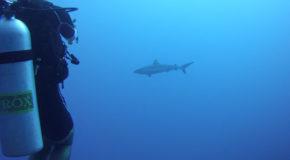 #686 : Plonger sur le site de la Vallée Blanche à Tahiti